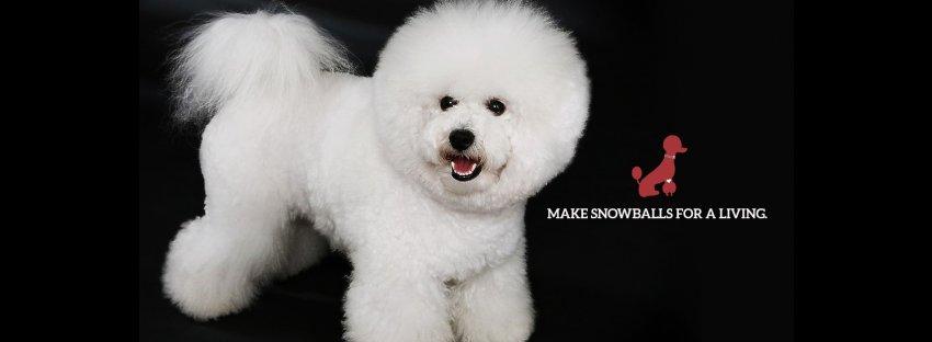 Dog Grooming School Of Pa