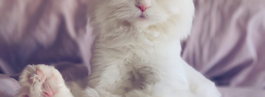Creature Comforts Cat Styling Salon