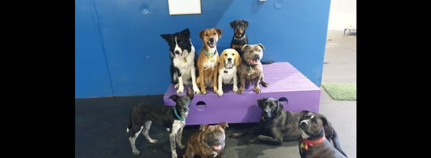 Scallywags Doggy Daycare & Training