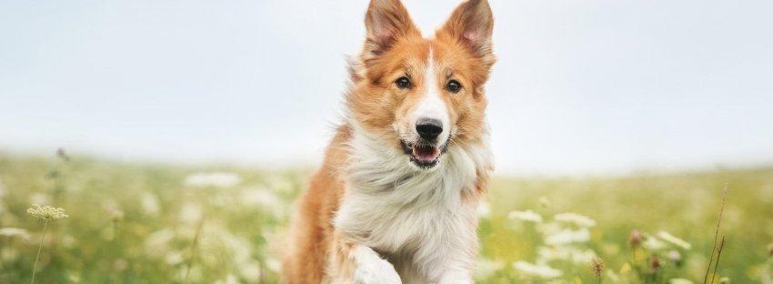 Bright Paws Dog Training Llc