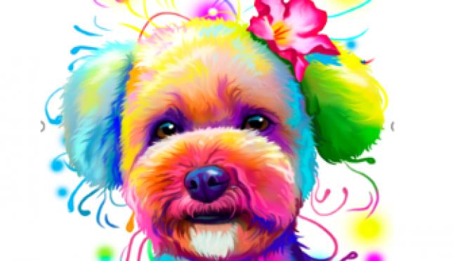 Daisy's Pet Shop, LLC